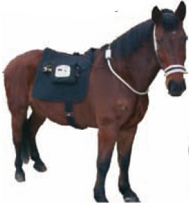 AMS Magnetic Field Therapy applied to a horse